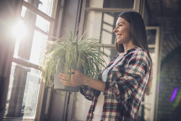 Young happy woman with spider plant by the window. stock photo