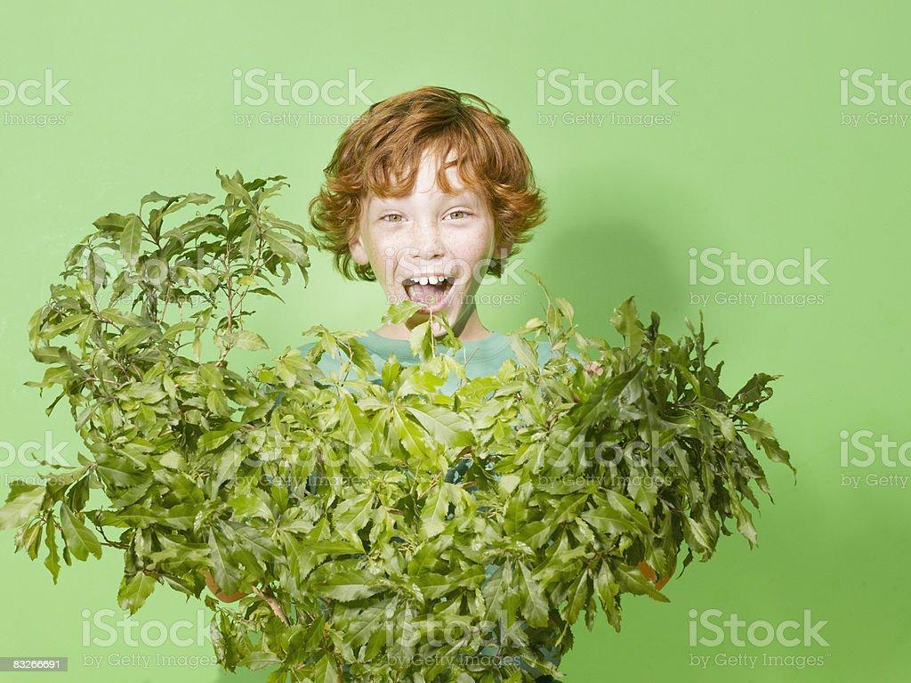 Plante verte jeune se cacher derrière photo libre de droits