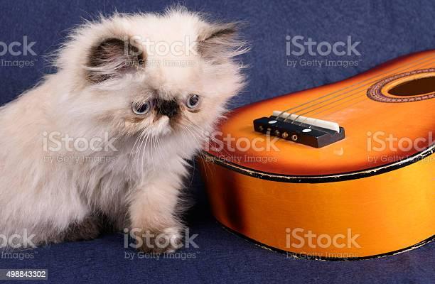 Young himalayan persian kitten with a guitar picture id498843302?b=1&k=6&m=498843302&s=612x612&h=xihwunsuphflp snwttxor7qvmew3g9nnmrnebvjkqk=