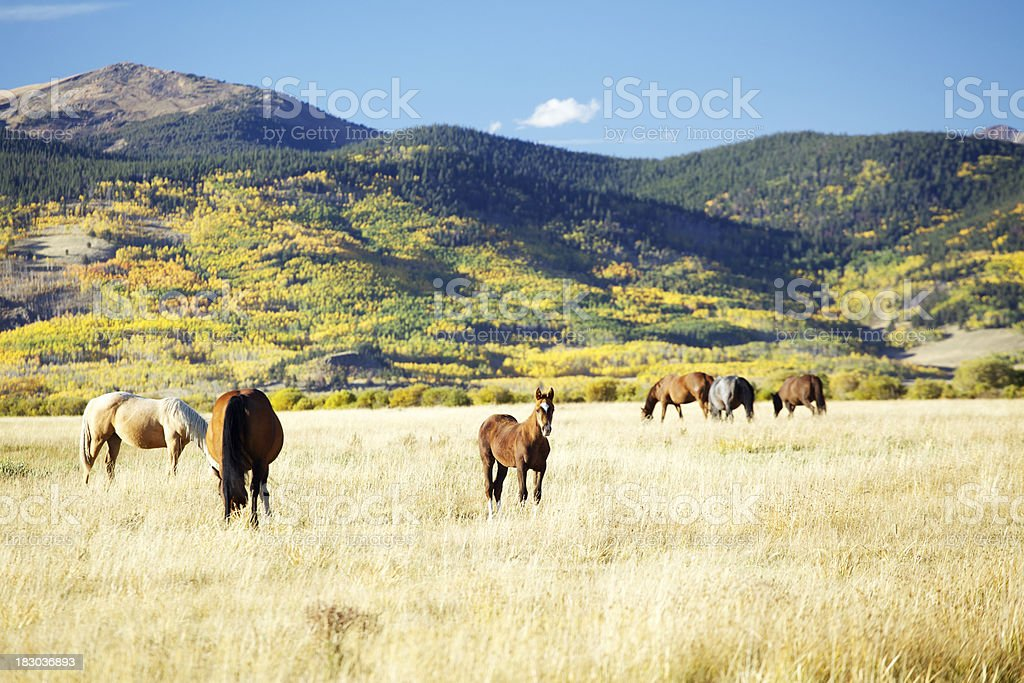 Young Horse separates from herd royalty-free stock photo