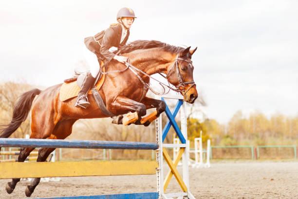 ung häst ryttare hoppar över hindret på show - hästhoppning bildbanksfoton och bilder