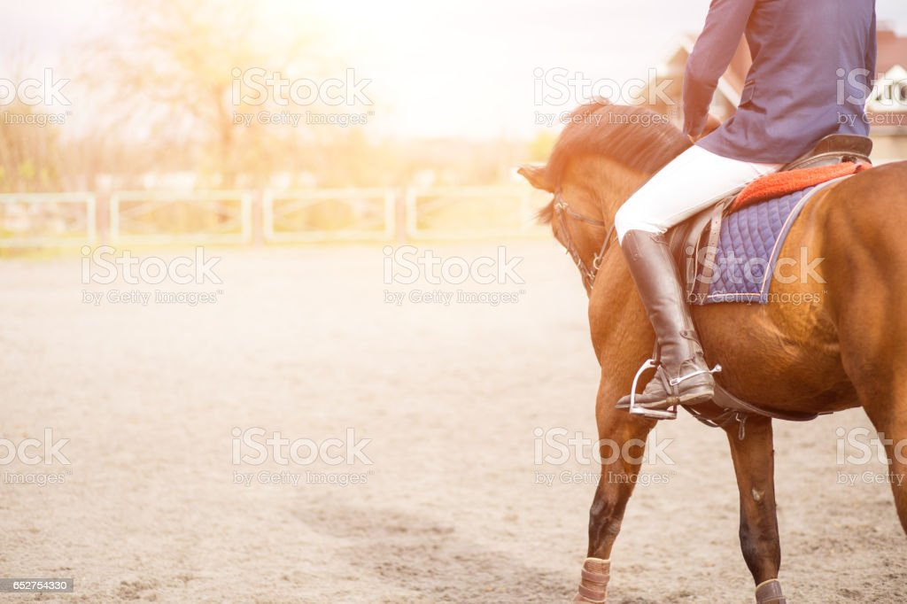 Young horseback rider on field with copy space - foto de acervo