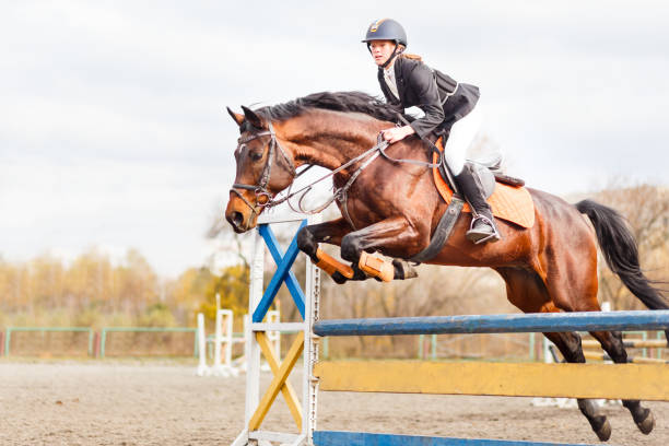 Best Equestrian Event Stock Photos, Pictures & Royalty-Free Images