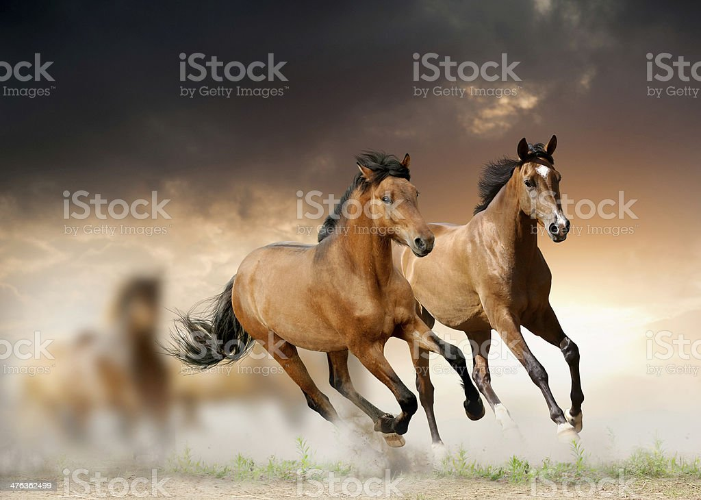 Young horses run stock photo