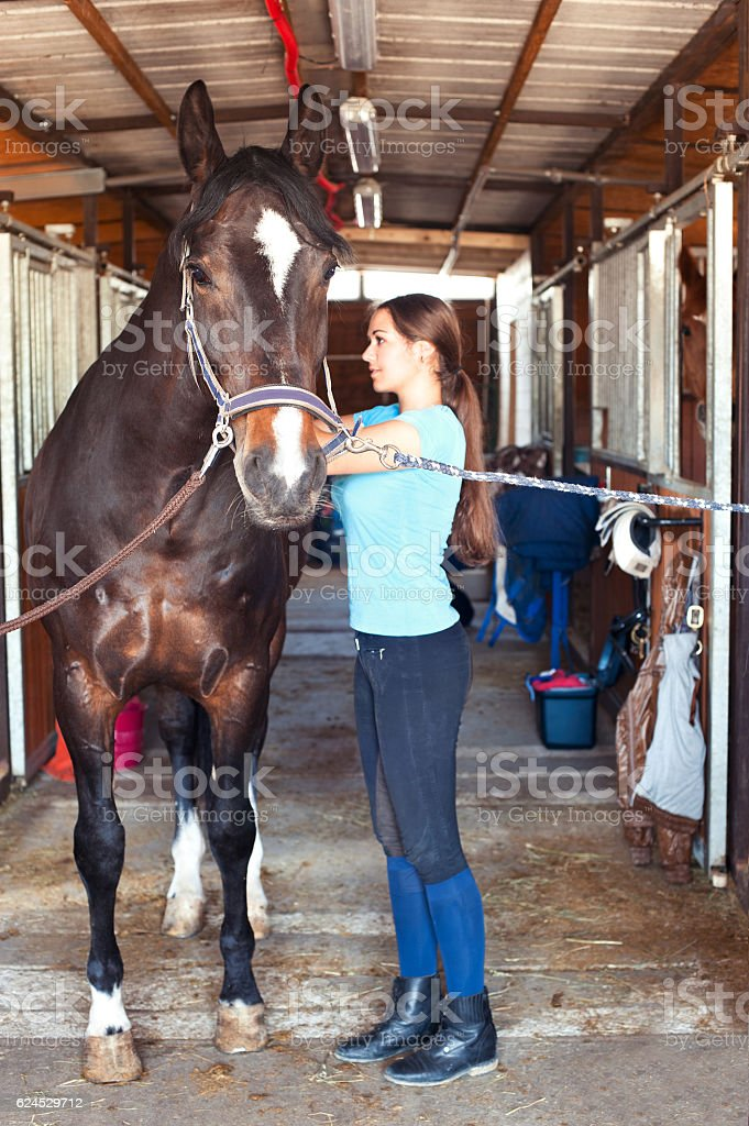 Young horsewomen owner harnessing the stallion in stable stock photo