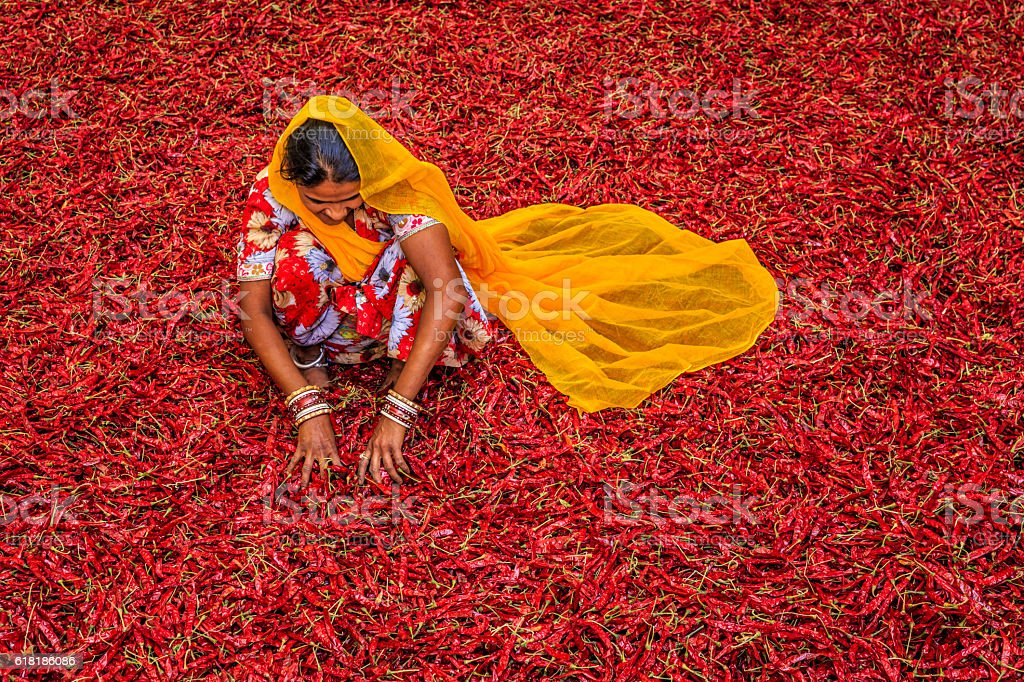 Young Indian woman sorting red chilli peppers, Jodhpur, India Young Indian woman sorting red chilli peppers near Jodhpur. Jodhpur is known as the Blue City due to the vivid blue-painted houses around the Mehrangarh Fort.  Adult Stock Photo