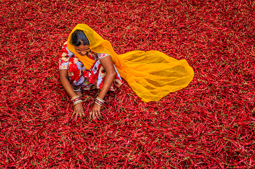 Young Indian Woman Sorting Red Chilli Peppers Jodhpur India Stock Photo - Download Image Now
