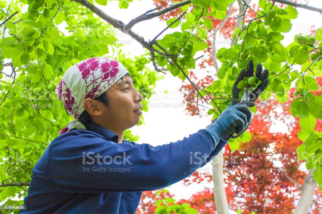 Young Japanese Gardener stock photo