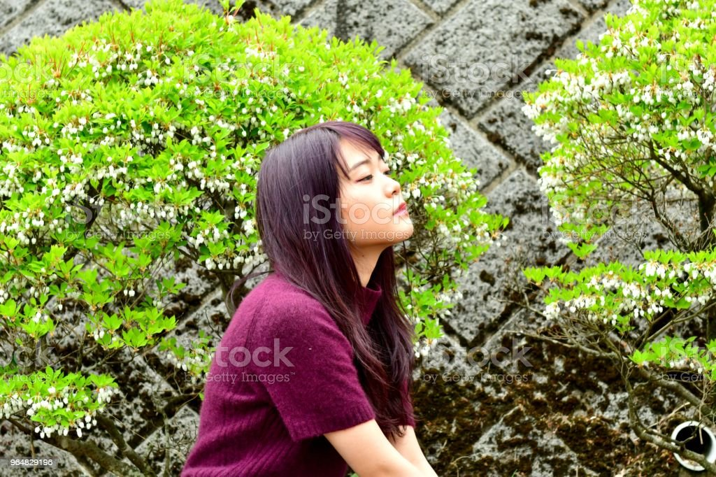 Young Japanese Woman Sitting in front of Enkianthus perulatus royalty-free stock photo