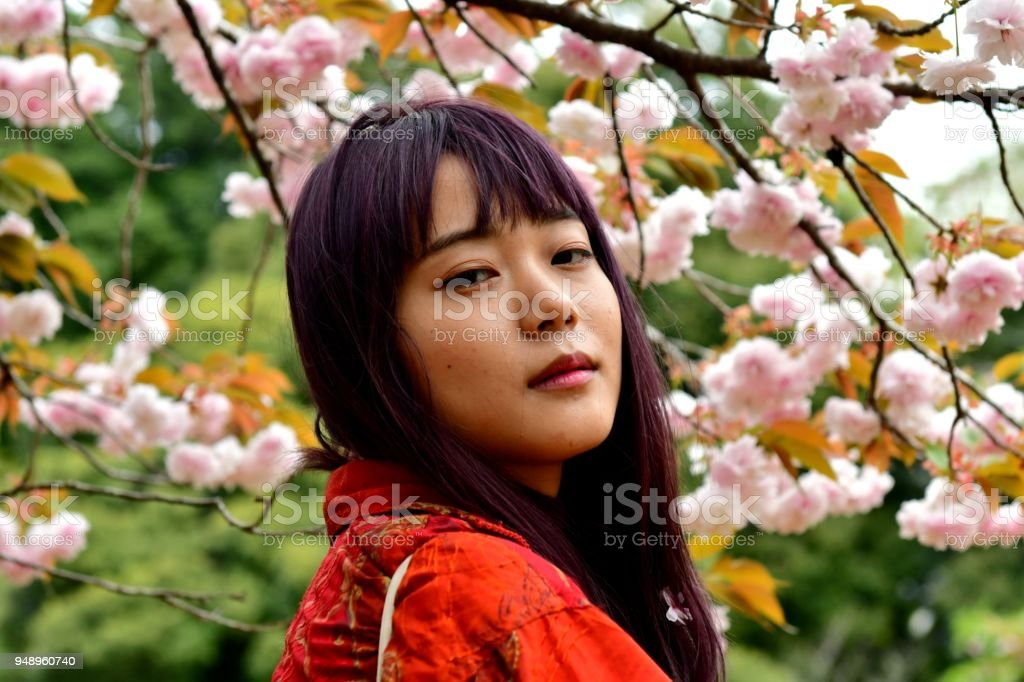 Young Japanese Woman Standing against Cherry Blossom in Suburbs of Tokyo stock photo