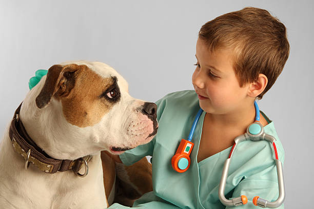 Young kid with vet attire and toy stethoscope petting a dog stock photo