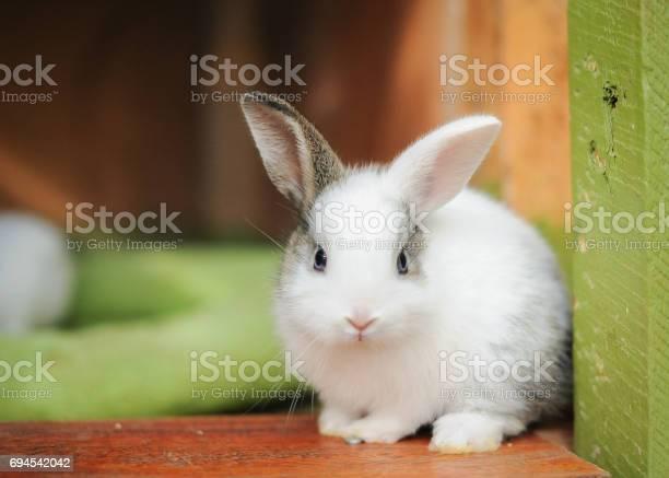 Young kit rabbits picture id694542042?b=1&k=6&m=694542042&s=612x612&h=vvh6 ywo1dhqfxr q lae1okfbxcdz43ljmyighhmke=