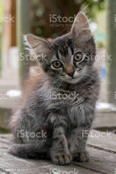 Young kitten is sitting on a wooden board picture id1168330115?b=1&k=6&m=1168330115&s=612x612&h=krlvawl8acblyr8btb3ajlrb5xrhal1j5rzvhw2tfdi=