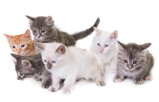 Young kitten picture id832997588?b=1&k=6&m=832997588&s=612x612&w=0&h=avdxnktvzdqf1nv0z064o4l ieqhegs8tkrbsnjwq1e=
