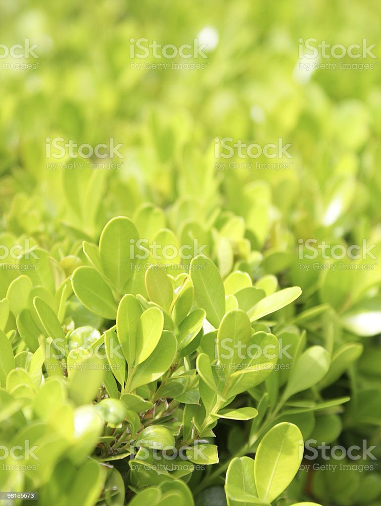 young leaves growing in spring royalty-free stock photo
