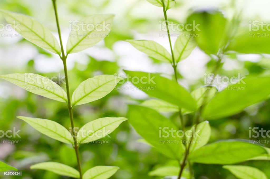 Young leaves stock photo