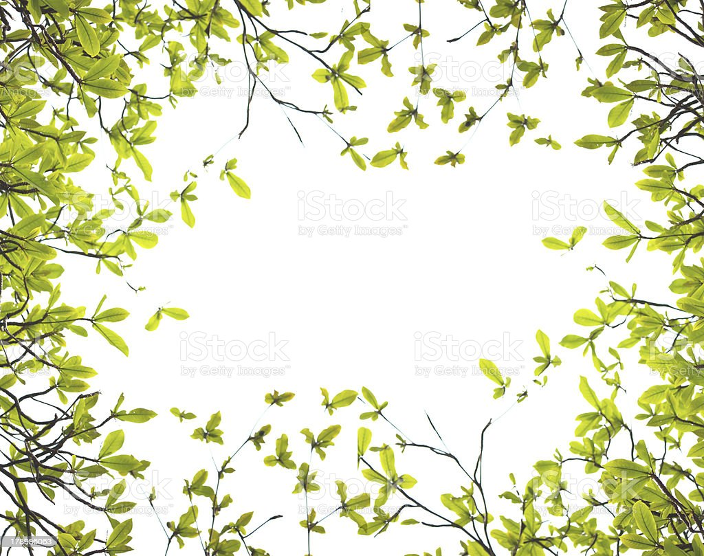 young leaves spring background -isolated on white royalty-free stock photo