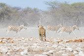 Photo taken in Etosha National Park, Namibia