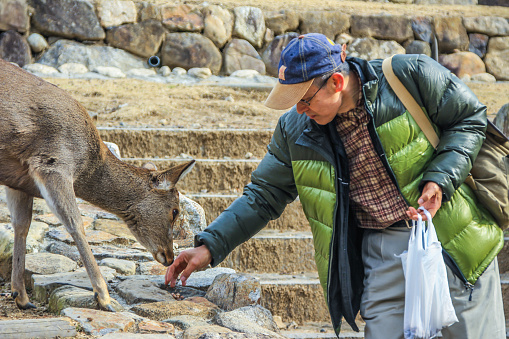 Young local guy feeding deers in the park. People and animals in the city.