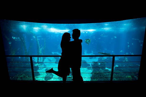 jovens amantes cuddle na frente de um aquário - people lisbon imagens e fotografias de stock