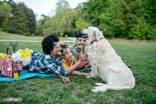 istock Young loving family having fun in the park 1143813677