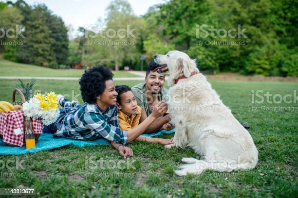 Young loving family having fun in the park picture id1143813677?b=1&k=6&m=1143813677&s=612x612&h=8jxirk9z ovzg7vcyofaokrd00dyjhetfdcgzx nvgu=