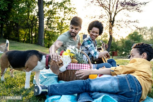istock Young loving family having fun in the park 1145903423