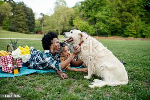 istock Young loving family having fun in the park 1146097657