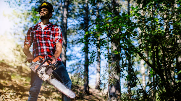 young lumberjack - chainsaw stock photos and pictures