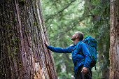 istock Young male admiring the ancient cedars 848638638