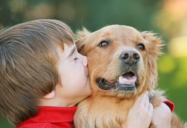 Young male child kissing golden retriever dog stock photo