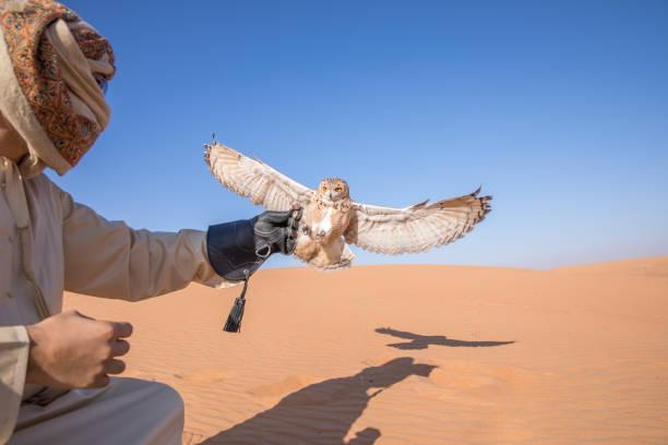 Young male pharaoh eagle owl (bubo ascalaphus) during a desert falconry show in Dubai, UAE. stock photo