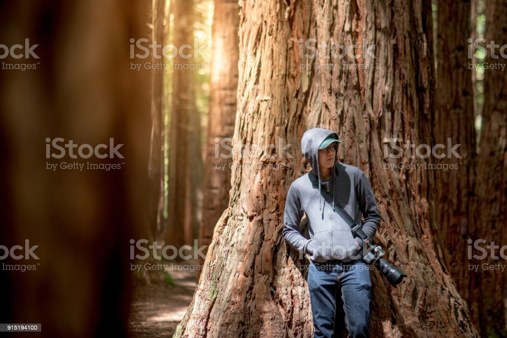Young male photographer wearing hoody standing in Redwood forest stock photo