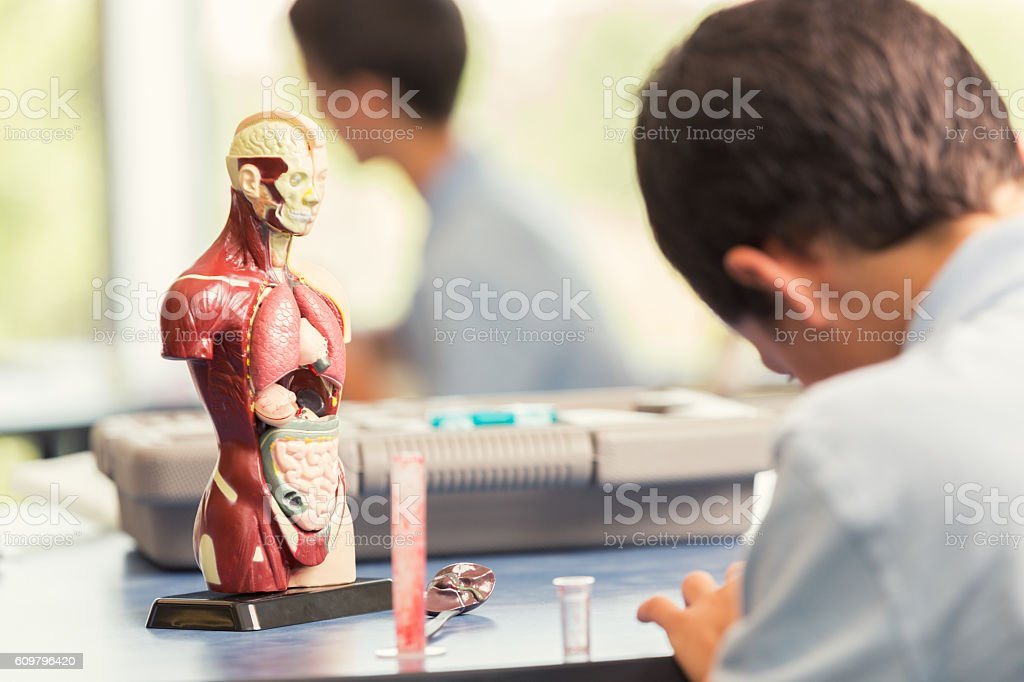 Young male student sits in class with an anatomical model stock photo