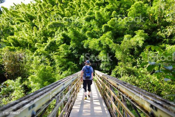 Photo of Young male tourist following the path through dense bamboo forest, leading to famous Waimoku Falls.