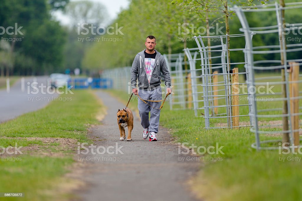Young man and his dog walking in the park stock photo