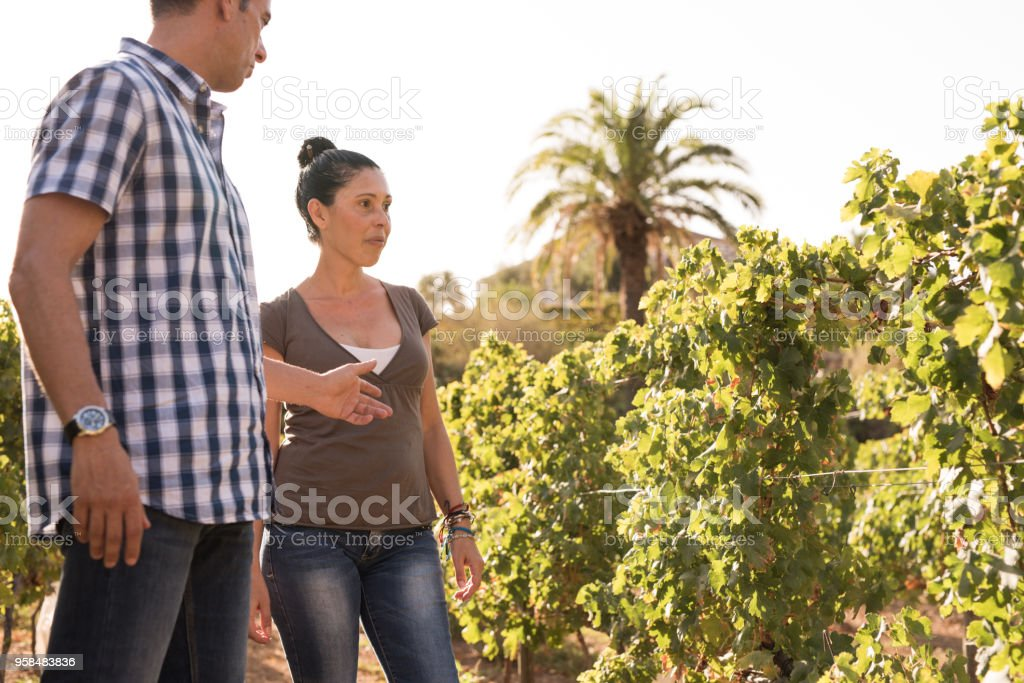 A young man and woman standing in the vineyards stock photo