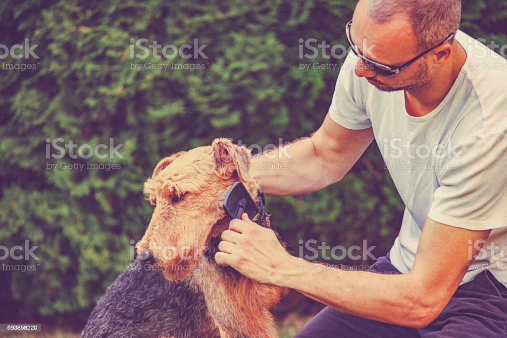 Young man brushing his dog in backyard. stock photo