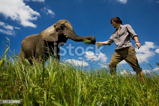 Young man feeding elephant in meadow with clear sky. Low angle shot of single animal picking grass. Close up. XXXL (Canon Eos 1Ds Mark III)