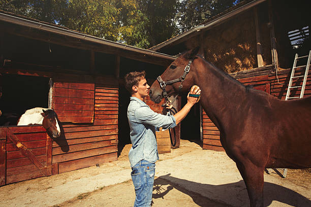 young man grooming a brown horse outdoors. - pferdepflege stock-fotos und bilder