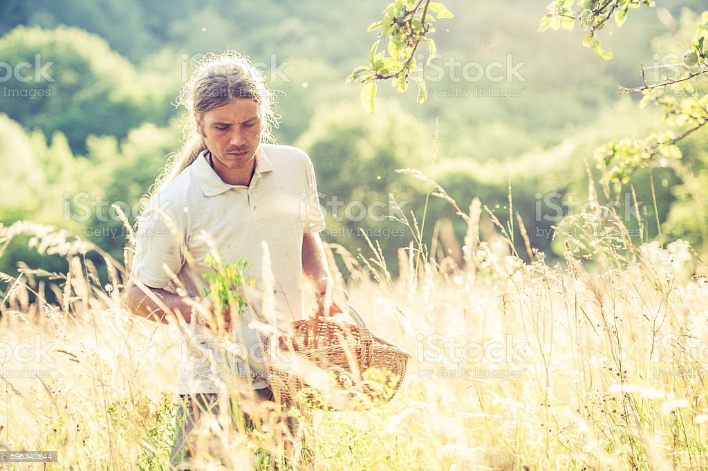 Young Man Harvesting Wild Herbs royalty-free stock photo