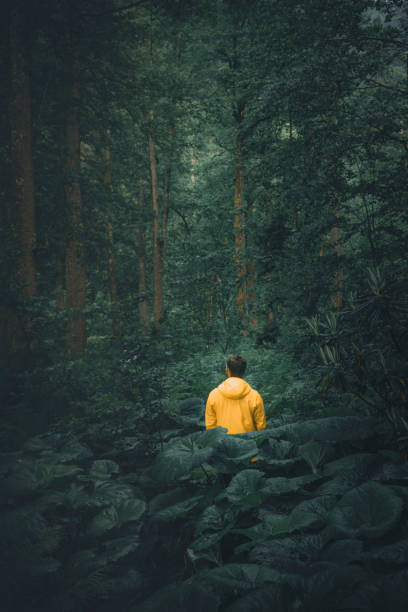Young man hiking in the moody forest natural area alone stock photo