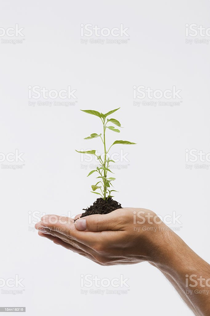 Young man holding plant royalty-free stock photo