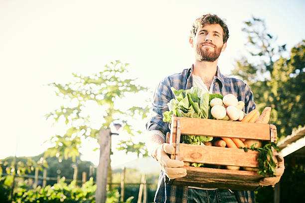 Young man holding vegetables in crate at organic farm – Foto