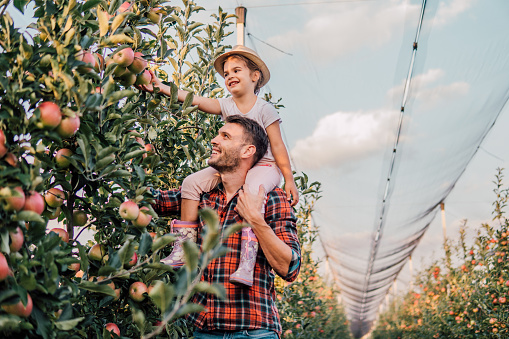 Happy young farmer holding his daughter piggyback at plantation of fruit