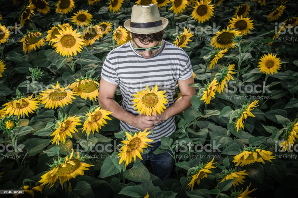 Young man i sunflower field stock photo