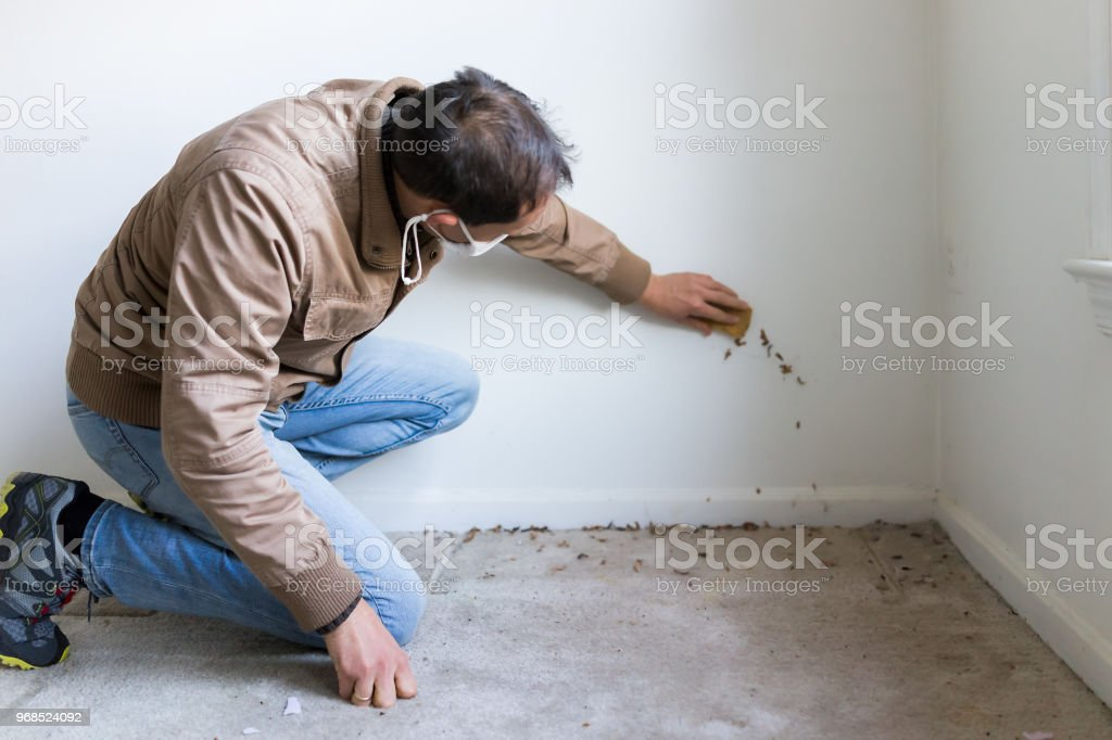 Young man in mask sitting crouching by room wall carpet floor flooring, white painted walls, during remodeling renovation, cleaning with sponge, inspection of dirty mold, dust, trash stock photo