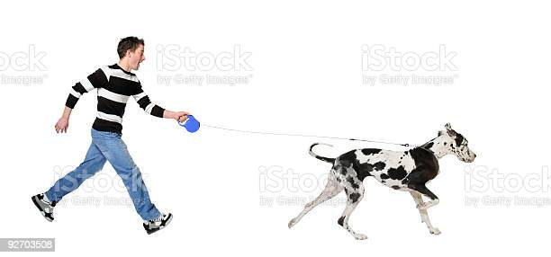 Young man in striped shirt walking his leashed great dane picture id92703508?b=1&k=6&m=92703508&s=612x612&h=wkfzauts2lhgpejtgzvlevsxonsdqfkkh 3ozvulte0=
