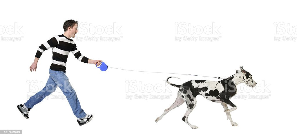 Young man in striped shirt walking his leashed Great Dane stock photo