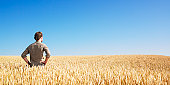 istock Young Man in Wheat Field 147084638